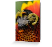 Bee and Pollen ( Macro ) Greeting Card