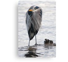 Great Blue Heron (as Vincent Price) Canvas Print