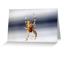 Garden Spider (macro) Greeting Card
