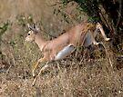Steenbok On The Run by Michael  Moss