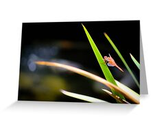 Red Dragonfly Greeting Card