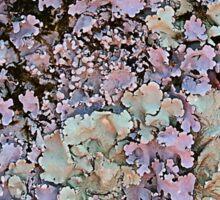 Leafy Lichen Sticker