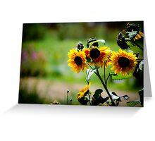 Sun Flower Soak up the Sun Greeting Card