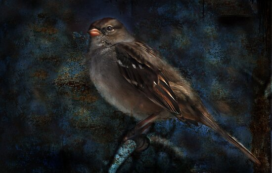 White-Crowned Sparrow by Barbara Manis