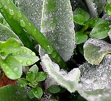 Raindrops on Spring's Green by Kate Eller