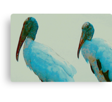Wood storks on a rooftop Canvas Print