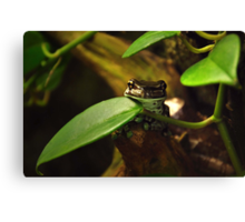 Frogger Canvas Print