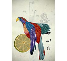 Trogon smiled at me Photographic Print
