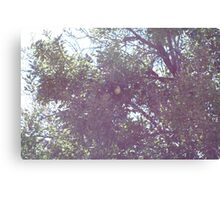 No partridge Canvas Print