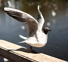 Ready for takeoff by Rene Fuller