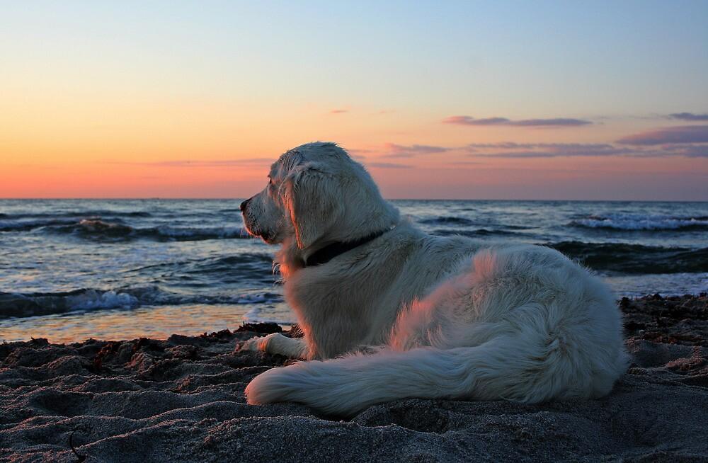 Ditte on the beach on a summer evening (Denmark) by Trine