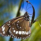 butterfly by Jenda Mudron