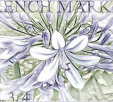 Agapanthus Pastel by Brenda Boisvert