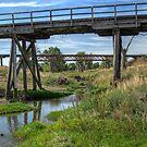 Dilapidated Bridges near Boorowa, NSW, Australia (Y) by Adrian Paul