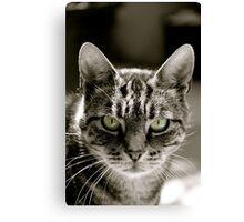 Steven the cat Canvas Print