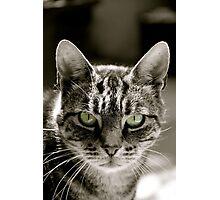 Steven the cat Photographic Print