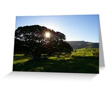 Gentle warmth Greeting Card