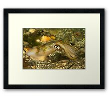 Seductive Squid Framed Print