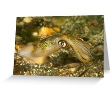 Seductive Squid Greeting Card