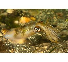 Seductive Squid Photographic Print
