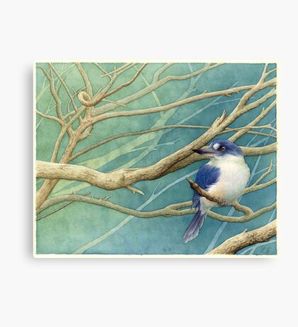 Forest kingfisher (Todiramphus macleayii) Canvas Print