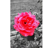 Water Drop the Rose  Photographic Print
