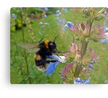Bumble in Blue Metal Print