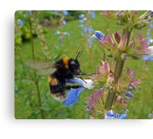 Bumble in Blue Canvas Print