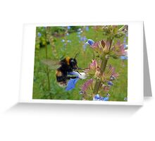 Bumble in Blue Greeting Card