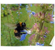 Bumble in Blue Poster