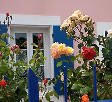 Pretty rose garden - Belle-ile, Sauzon, Brittany by moor2sea