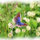 Common Blue! by peaky40
