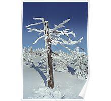 A diamond-dust day at the Smrk mountain 2 (Jizera mountains, Czech Republic) Poster