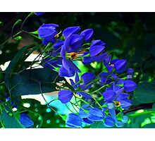 magestic blue Photographic Print