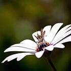 Bug on a Flower by Karen Millard
