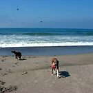 Dog Days At The Beach by © Loree McComb