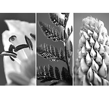 Texture Triptych Photographic Print