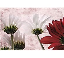 Red agains white Photographic Print