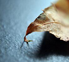 Dead Leaves_13 by Krystal Cunningham