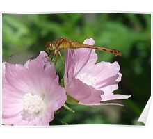 Dragon On Mallow Poster