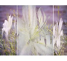 Spring is around the Corner Photographic Print