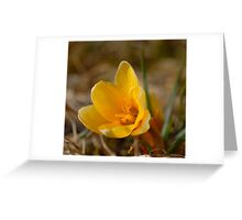 Crocus - Yellow Greeting Card