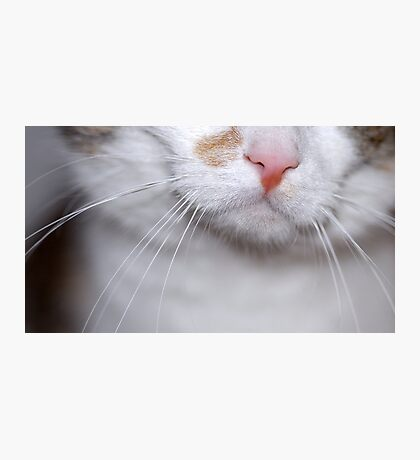 Nellie - Nose Photographic Print