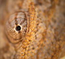 Chameleon Gaze by Noam Gordon