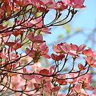 Dogwood Tree Pink Flowers Blue Sky art Baslee Troutman by BasleeArtPrints