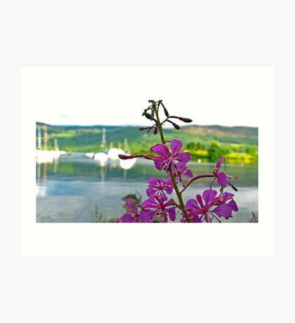Loch Ness Flower Art Print