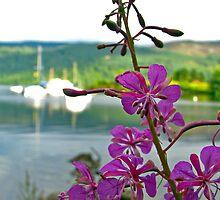 Loch Ness Flower by Nicholas Jermy
