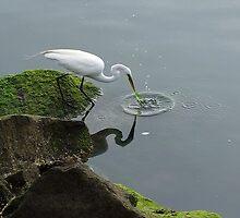 Egret morning breakfast by Frank Nave