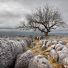 Limestone Survivors by SteveMG