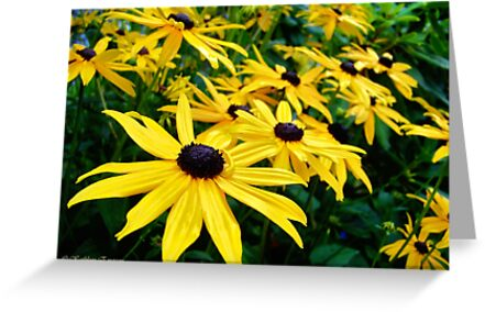 Sunshine (Black Eyed Susans) by rocamiadesign